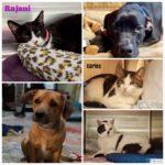 Pets_photo_2.-150x150